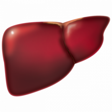 Liver Diseases and Transplantation Centre Launched by Kauvery Group of Hospitals